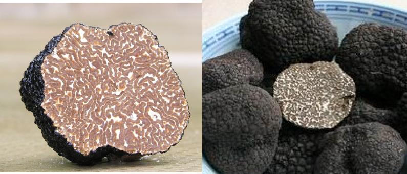 Italian Truffles Vs. Chinese Truffles